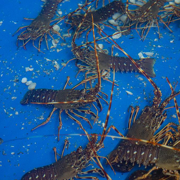 Viveiros de marisco vivo Concha Mar